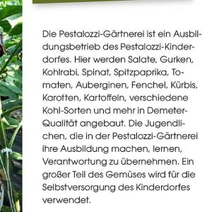 Auberginen bei Feneberg
